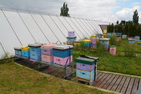 Pasieka na dachu ratusza i enklawy dla pszczół