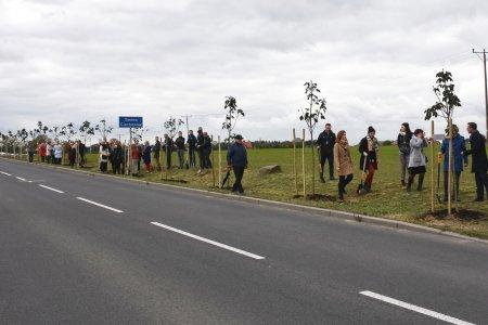 Wzdłuż drogi rośnie rząd nowo posadzonych drzewk. Stoją przy nich osoby, które brały udział w sadzeniu