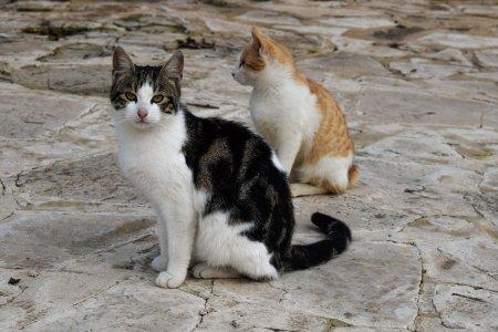 Dwa łaciate koty siedzące na betonie